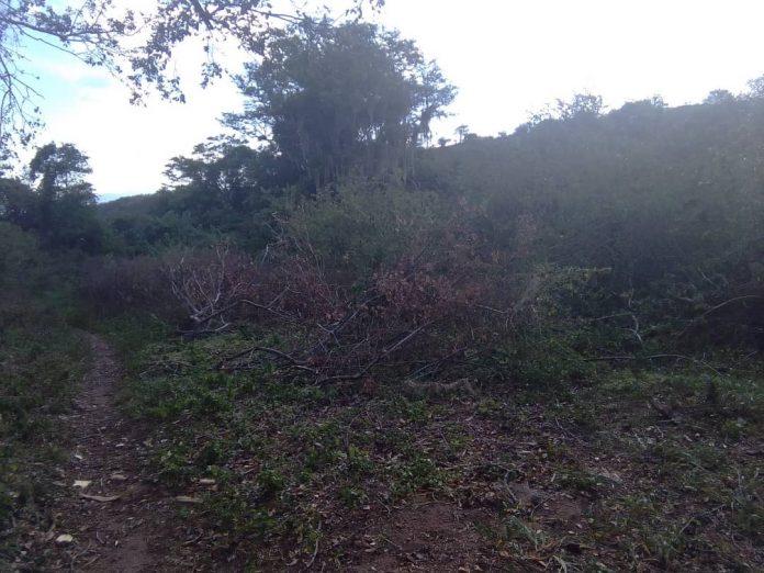tala, Táchira