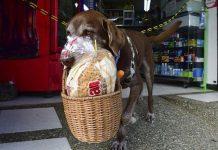 eros deliveries colombia perro