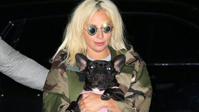 Lady Gaga perros