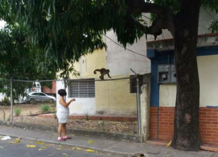 monos zoológico