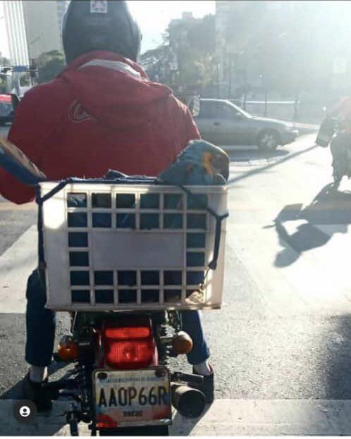 motorizado guacamaya