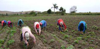 Productores agropecuarios