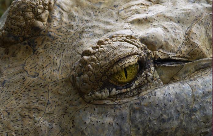 cocodrilo, tesoro arqueológico