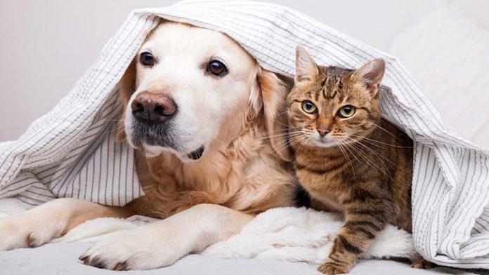 mascotas envenenamiento