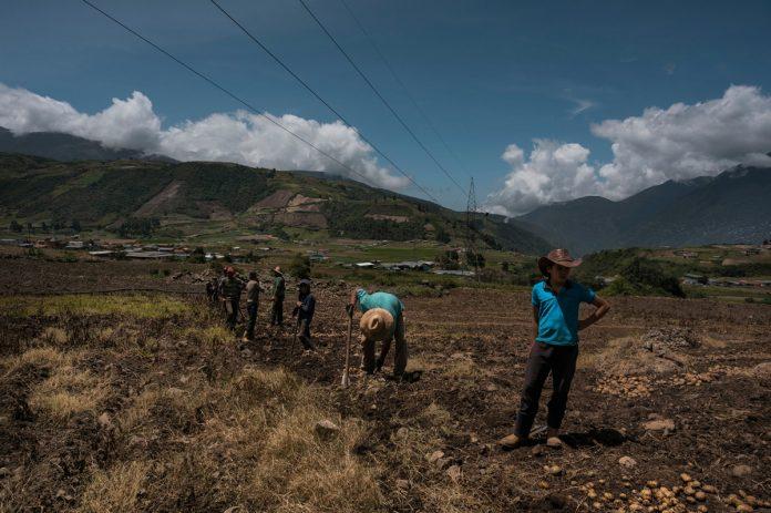 Franquicias criminales mantienen azotados a los productores agrícolas - Conindustria expresó preocupación por escasez de gasoil en Venezuela