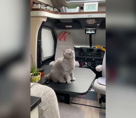 cáncer gata